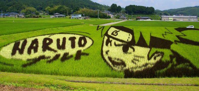 Une rizière Naruto !