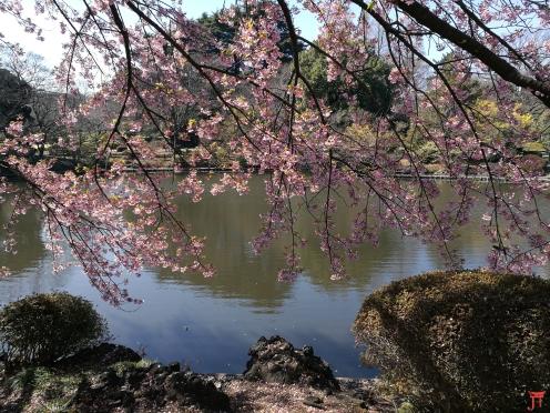 Un coin de paradis au bord de l'eau au Parc Gyoen, Shinjuku à Tokyo