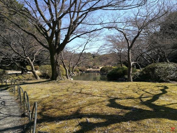 Le calme à la japonaise, le parc Shinjuku Gyoen
