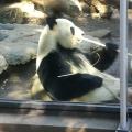 Zoo Ueno – Tokyo