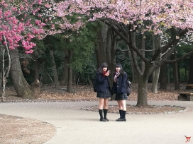 Hanami au coeur du parc du musée ghibli.
