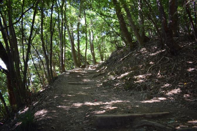 Tokyo : Ascension du Mont Takao (Jour 5)